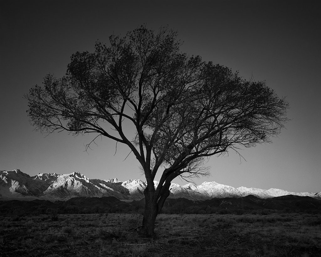 Tree and Mount Whitney, 2013